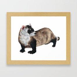 Black-Footed Ferret Framed Art Print
