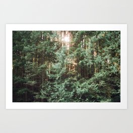 in the pines 35mm Art Print