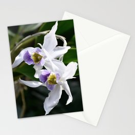 Wedding Orchids Stationery Cards