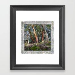 MADRONA WOODS Framed Art Print
