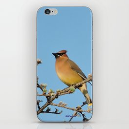 Cedar Waxwing Faces Sunset iPhone Skin