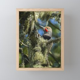 Northern Flicker Framed Mini Art Print