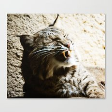 Catterwalling Canvas Print