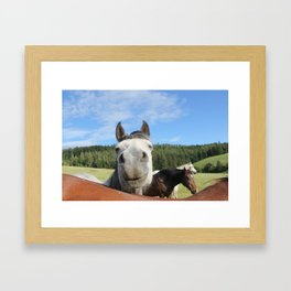 Horse Smile Photography Print Framed Art Print