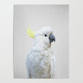 White Cockatoo - Colorful Poster