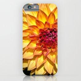 Orange yellow flower Dahlia iPhone Case