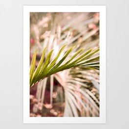 Sunkissed Palm Art Print