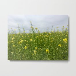 Field of Green and Gold Metal Print