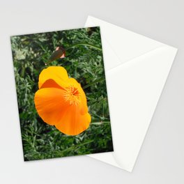 Golden Beauty. California Poppy. © J. Montague. Stationery Cards
