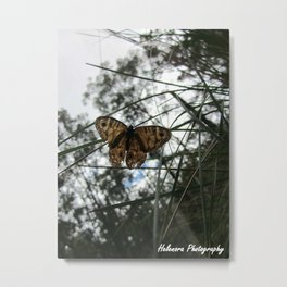 Butterfly (2) Metal Print