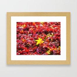Color of Fall Framed Art Print