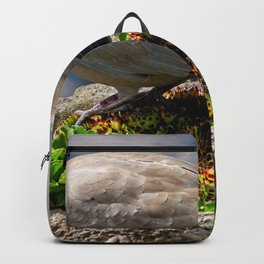 Collared Dove Backpack