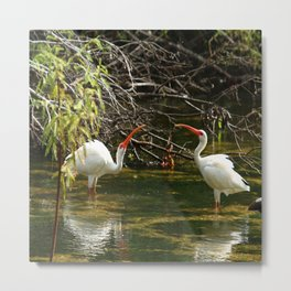 Ibis Dating Place Metal Print