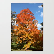 Red, Orange, Yellow Tree Color Photography Canvas Print