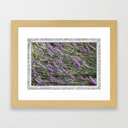 """LAVANDULA """"FRED BOUTIN"""" Framed Art Print"""