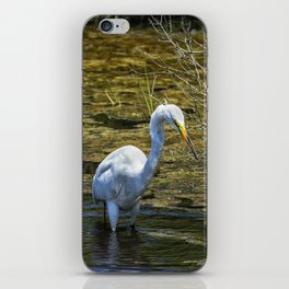 Great Egret Foraging in a Stream iPhone Skin