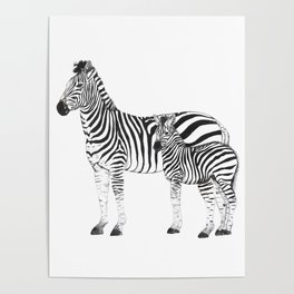 Mom zebra and baby Poster