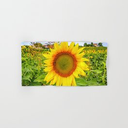 Fields of sunflowers on the hills of Marche Region on the Adriatic Sea, Italy Hand & Bath Towel