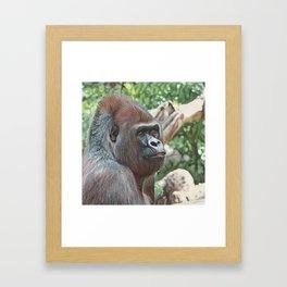 Impressive Animal - Strong Gorilla Framed Art Print