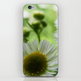 All For You My Daisy  iPhone Skin