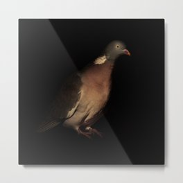 Woodpigeon Portrait Metal Print