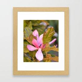 Japanese Magnolia Blossom Framed Art Print