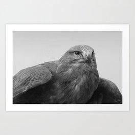 Common Buzzard BW Art Print