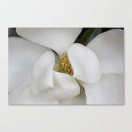 White Magnolia, Magnolia Photograph, Flower Photograph, Nature Photography,  Canvas Print