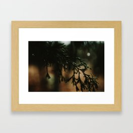 Water Drops from Winter Fir Branch Framed Art Print