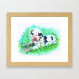 Jacoby the Great Dane Framed Art Print
