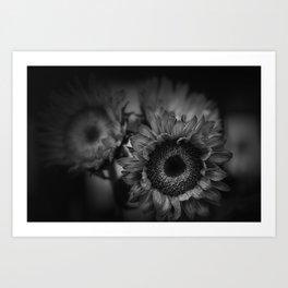 Sunflower in black and white Art Print
