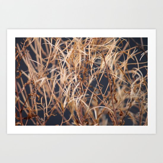 Dry Grass Art Print