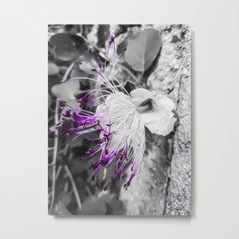LILIAC FLO Metal Print