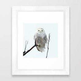 Snowy in the Wind (Snowy Owl 2) Framed Art Print