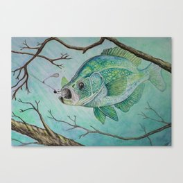 Crappie and Jig Canvas Print
