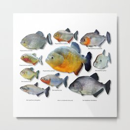 Piranha family Metal Print