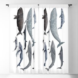 Whales and right whale Blackout Curtain