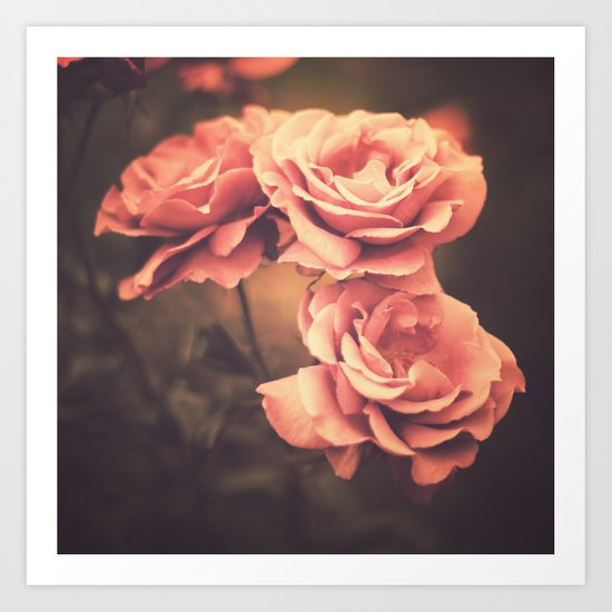 Three Pink Roses (Vintage Flower Photography) Art Print