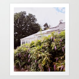 Summer Greenhouse with Wisteria Art Print