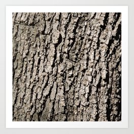 TEXTURES - Valley Oak Tree Bark Art Print