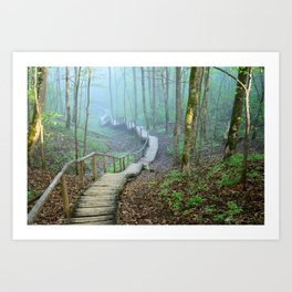 Walkway in the Forest Canvas Art Art Print