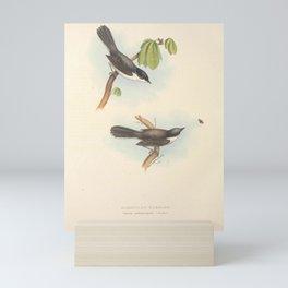 SARDINIAN WARBLER11 Mini Art Print