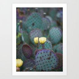 Cactus Blooms Art Print