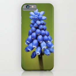 Blauwe Druifjes iPhone Case