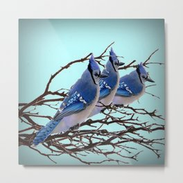 THREE AMERICAN BLUE JAYS ART WINTER ART Metal Print