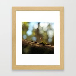 The Lonely Mushroom Framed Art Print
