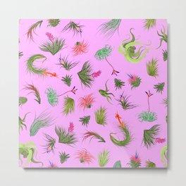 Air Plants Pink Background Metal Print