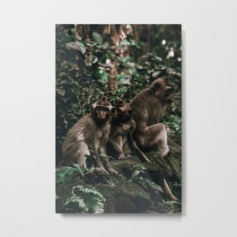 monkey forest ii / indonesia Metal Print