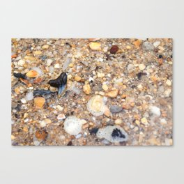 Virginia - Find the Fossil Shark Tooth Canvas Print