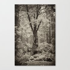 Old Oak Dark  Canvas Print